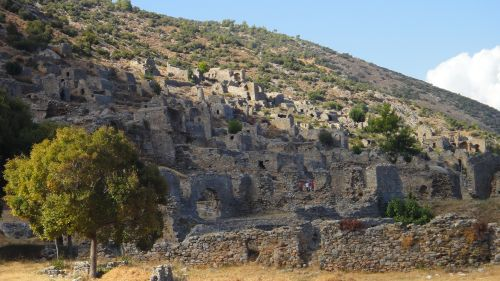anemurium анемуриум на склоне горы