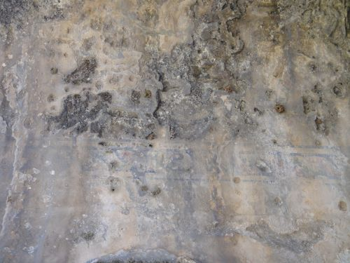 остатки декора анемуриум anemurium
