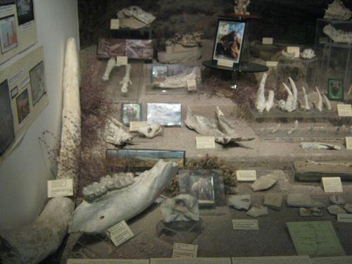 Музей Анатолийских цивилизаций кости