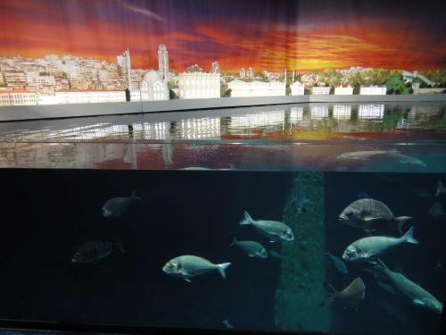 Аквариум Стамбул Istanbul Aquarium зал