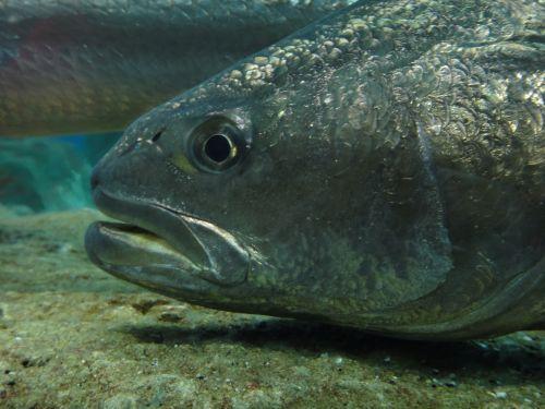 Аквариум Стамбул Istanbul Aquarium рыбья голова