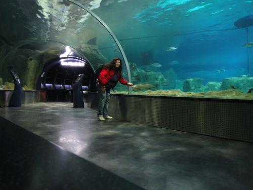 Аквариум Стамбул Istanbul Aquarium тоннель