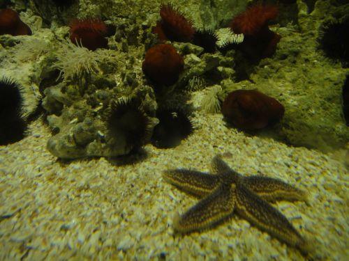 Аквариум Стамбул Istanbul Aquarium морские звезды