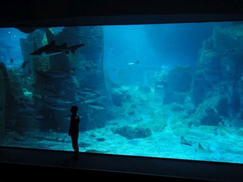 Аквариум Стамбул Istanbul Aquarium большой