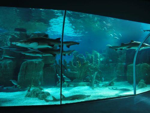 Аквариум Стамбул Istanbul Aquarium стая акул