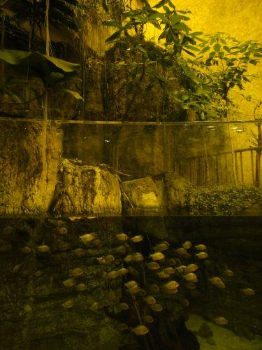 Аквариум Стамбул Istanbul Aquarium тропические рыбы
