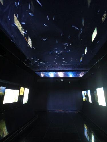 Аквариум Стамбул Istanbul Aquarium рыбий потолок