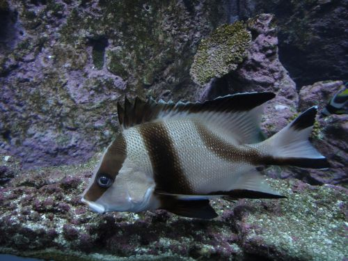 Аквариум Стамбул Istanbul Aquarium рыбы