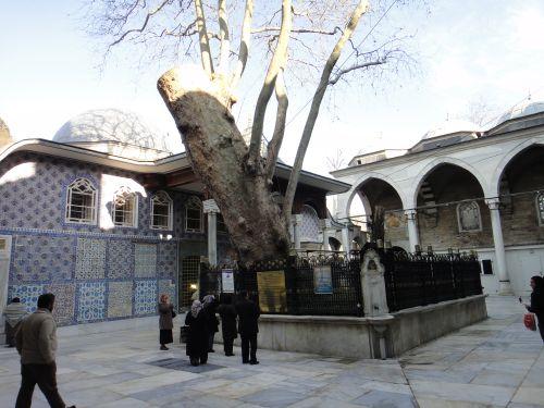 мечеть эйюп платан и источники