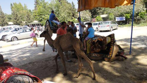 катание на верблюдах Манавгат водопад selale Manavgat