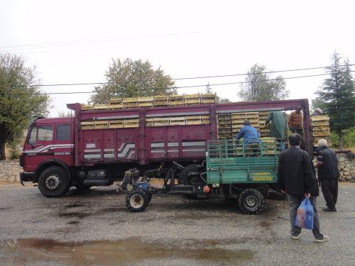 Узунджабурч uzuncaburc скупка винограда